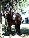 Foto Mostra Cavallo Bardigiano 2007 Mostra Cavallo Bardigiano 2007 057
