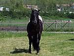Foto Mostra Cavallo Bardigiano 2007 Mostra Cavallo Bardigiano 2007 059