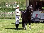 Foto Mostra Cavallo Bardigiano 2007 Mostra Cavallo Bardigiano 2007 061