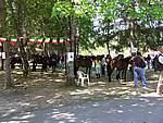 Foto Mostra Cavallo Bardigiano 2007 Mostra Cavallo Bardigiano 2007 064