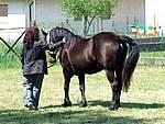 Foto Mostra Cavallo Bardigiano 2007 Mostra Cavallo Bardigiano 2007 068