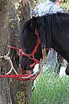Foto Mostra Cavallo Bardigiano 2009 Cavallo_bardigiano_09_002