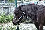 Foto Mostra Cavallo Bardigiano 2009 Cavallo_bardigiano_09_003