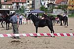Foto Mostra Cavallo Bardigiano 2009 Cavallo_bardigiano_09_005