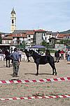 Foto Mostra Cavallo Bardigiano 2009 Cavallo_bardigiano_09_006