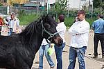 Foto Mostra Cavallo Bardigiano 2009 Cavallo_bardigiano_09_007
