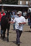 Foto Mostra Cavallo Bardigiano 2009 Cavallo_bardigiano_09_008