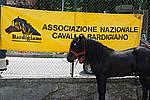 Foto Mostra Cavallo Bardigiano 2009 Cavallo_bardigiano_09_011