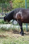 Foto Mostra Cavallo Bardigiano 2009 Cavallo_bardigiano_09_012