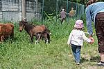 Foto Mostra Cavallo Bardigiano 2009 Cavallo_bardigiano_09_020