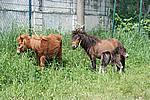 Foto Mostra Cavallo Bardigiano 2009 Cavallo_bardigiano_09_021