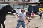 Foto Mostra Cavallo Bardigiano 2009 Cavallo_bardigiano_09_025