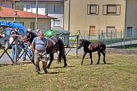 Foto Mostra Cavallo Bardigiano 2012 Cavallo_bardigiano_2012_002