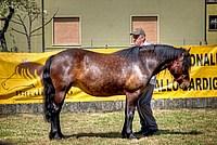 Foto Mostra Cavallo Bardigiano 2012 Cavallo_bardigiano_2012_003