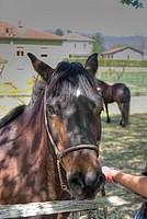 Foto Mostra Cavallo Bardigiano 2012 Cavallo_bardigiano_2012_005