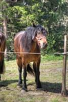 Foto Mostra Cavallo Bardigiano 2012 Cavallo_bardigiano_2012_011