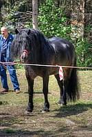 Foto Mostra Cavallo Bardigiano 2012 Cavallo_bardigiano_2012_012