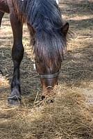 Foto Mostra Cavallo Bardigiano 2012 Cavallo_bardigiano_2012_015