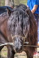 Foto Mostra Cavallo Bardigiano 2012 Cavallo_bardigiano_2012_018