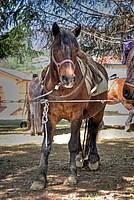Foto Mostra Cavallo Bardigiano 2012 Cavallo_bardigiano_2012_023