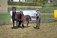 Foto Mostra Cavallo Bardigiano 2012 Cavallo_bardigiano_2012_026
