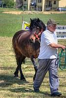 Foto Mostra Cavallo Bardigiano 2012 Cavallo_bardigiano_2012_028