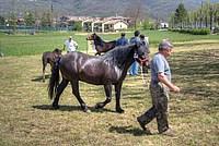 Foto Mostra Cavallo Bardigiano 2012 Cavallo_bardigiano_2012_032