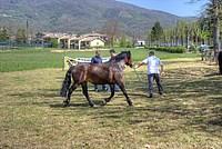 Foto Mostra Cavallo Bardigiano 2012 Cavallo_bardigiano_2012_034