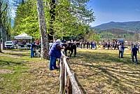 Foto Mostra Cavallo Bardigiano 2012 Cavallo_bardigiano_2012_043