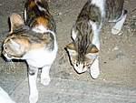 Foto Mykonos 2006 Mykonos 2006 133