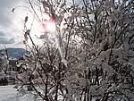 Foto Nevicata 2005 Neve di Natale 2005 058