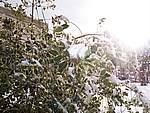 Foto Nevicata 2005 Neve di Natale 2005 059