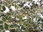Foto Nevicata 2005 Neve di Natale 2005 060