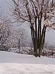 Foto Nevicata 2005 Neve di Natale 2005 062