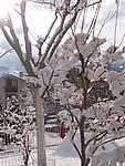 Foto Nevicata 2005 Neve di Natale 2005 064