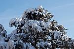 Foto Nevicata 2009 - il meglio Neve_2009_021