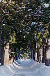 Foto Nevicata 2009 - il meglio Neve_2009_026