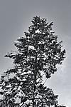 Foto Nevicata 2009 - il meglio Neve_2009_054