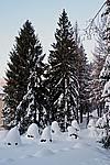 Foto Nevicata 2009 - il meglio Neve_2009_055
