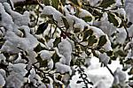 Foto Nevicata 2009 - il meglio Neve_2009_086