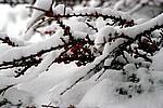 Foto Nevicata 2009 - il meglio Neve_2009_088