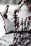 Foto Nevicata 2009 - il meglio Neve_2009_089