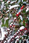 Foto Nevicata 2009 - il meglio Neve_2009_090