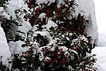 Foto Nevicata 2009 - il meglio Neve_2009_097