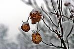 Foto Nevicata 2009 - il meglio Neve_2009_098
