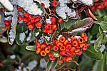 Foto Nevicata 2009 - il meglio Neve_2009_100