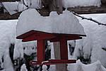Foto Nevicata 2009 - il meglio Neve_2009_101
