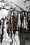 Foto Nevicata 2009 - il meglio Neve_2009_104