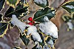 Foto Nevicata 2009 - il meglio Neve_2009_107