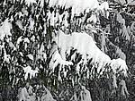 Foto Nevicata 2009 Nevicata_2009_060
